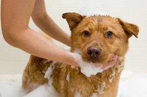Here-are-a-few-tips-for-thoroughly-grooming-a-dog_16001125_40008335_0_14082481_500