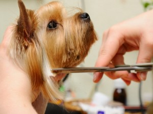 Here-are-a-few-ways-to-make-dog-grooming-easier_16001125_40006236_0_14040805_500