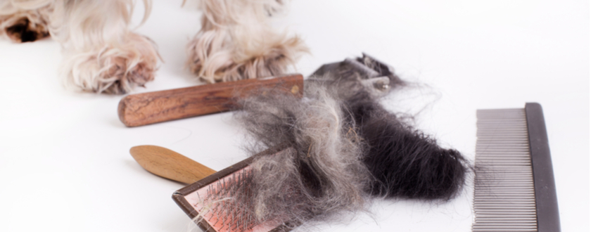 How to Rescue a Matted Coat